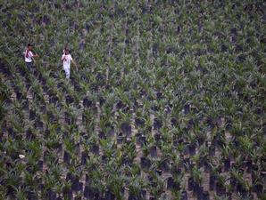 petani-kelapa-sawit