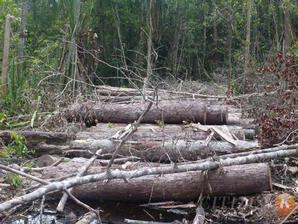 Hutan_Indonesia_yang_Rusak